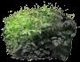 Parzydło leśne
